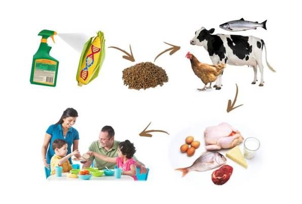 GDO'lu besinlerin insan sağlığına etkileri