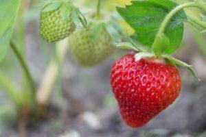 Organik tüketilmesi gereken ve gerekmeyen sebze meyveler